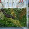 Съедобная живая зеленая стена