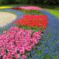 Бордюр из цветов